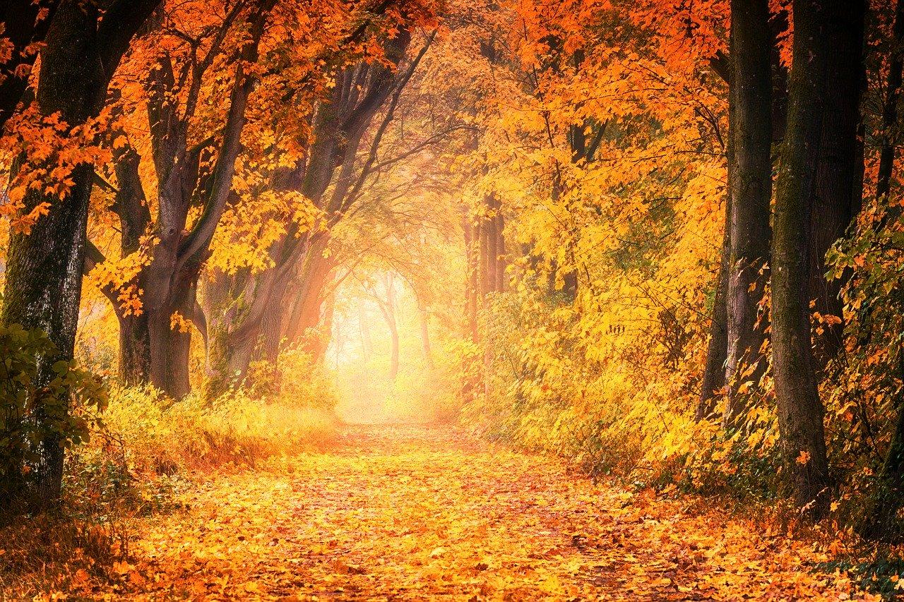 tree, autumn, nature